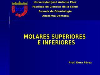 4 - molares superiores e inferiores.ppt